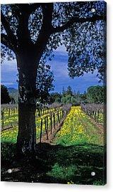 Vineyard View Acrylic Print by Kathy Yates