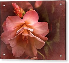 Vintage Camellia No. 1 Acrylic Print by Richard Cummings