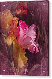 Vintage Gladiolas Acrylic Print by Richard Cummings
