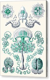 Vintage Jellyfish Acrylic Print by Patruschka Hetterschij