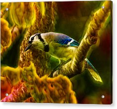 Visions Of A Blue Jay Acrylic Print by Bill Tiepelman