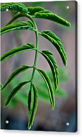 Vivid Plant Acrylic Print by Erik Hovind