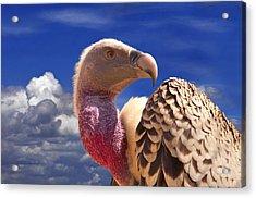 Vulture Acrylic Print by Alessandro Matarazzo