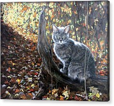 Waiting In The Woods Acrylic Print by Sandra Chase