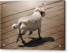 Walking The Dog Acrylic Print by Steven  Michael