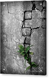 Wall Ferns Acrylic Print by Perry Webster