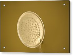 Water Drips From Shower Head Acrylic Print by Joel Sartore