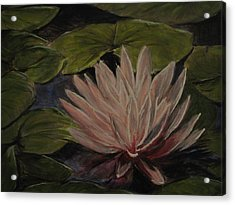 Water Lily Acrylic Print by Sherry Robinson