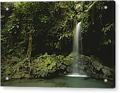 Waterfall And Emerald Pool In A Lush Acrylic Print by Tim Laman