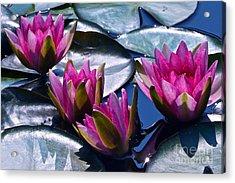 Waterlilies In Bright Sunlight Acrylic Print by Byron Varvarigos