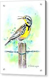 Western Meadowlark Acrylic Print by Arline Wagner
