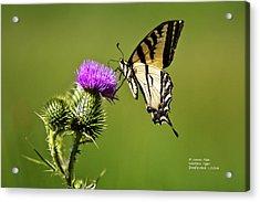 Western Tiger Swallowtail - Milkweed Thistle 2564 Acrylic Print by James Ahn