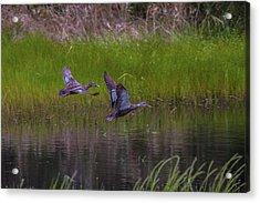 Wetland Wonders Iv Acrylic Print by Dave Kelly