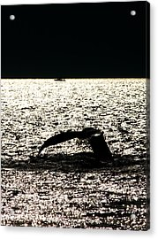 Whale In Sunset Acrylic Print by Paul Ge