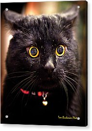 What Does Neuter Mean Acrylic Print by Tom Buchanan