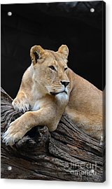 What Is Over There Acrylic Print by Eva Kaufman