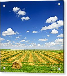 Wheat Farm Field At Harvest Acrylic Print by Elena Elisseeva