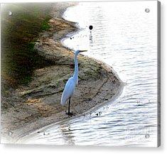 Where The Herons Meet Acrylic Print by Susanne Van Hulst
