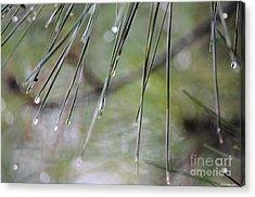Whispers Of An Autumn Rain Acrylic Print by Maria Urso