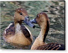 Whistling Ducks Acrylic Print by Paulette Thomas