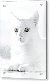 White Cat Acrylic Print by Vilhjalmur Ingi Vilhjalmsson