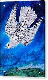 White Falcon Mascot Acrylic Print by Phyllis Barrett