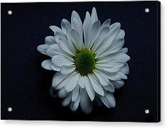 White Flower 1 Acrylic Print by Ron Smith