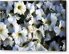 White Flowers At Dusk Acrylic Print by Sumit Mehndiratta