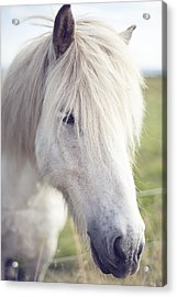 White Horse Acrylic Print by copyright by Elena Litsova Photography