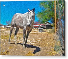 White Horse Acrylic Print by Gregory Dyer