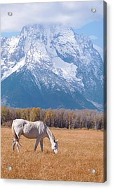 White Horse In Teton National Park Wy Usa Acrylic Print by Chasing Light Photography Thomas Vela