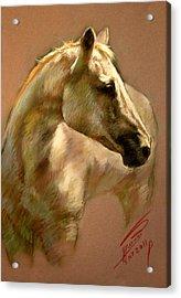 White Horse Acrylic Print by Ylli Haruni