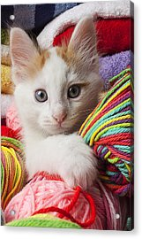 White Kitten Close Up Acrylic Print by Garry Gay