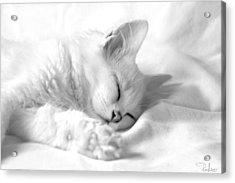 White Kitten On White. Acrylic Print by Raffaella Lunelli