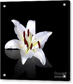 White Lily Acrylic Print by Jane Rix