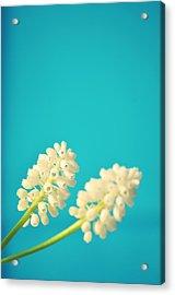White Muscari Flowers Acrylic Print by Photo by Ira Heuvelman-Dobrolyubova