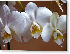 White Orchid  Acrylic Print by Svetlana Sewell