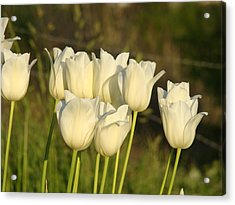 White Tulip Flowers Art Prints Spring Green Garden Acrylic Print by Baslee Troutman