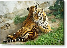 Wild Content Acrylic Print by Sandra Chase