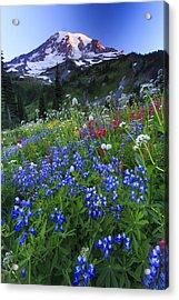 Wild Flowers In The Rainier National Park Acrylic Print by Gavriel Jecan