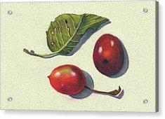Wild Plums And Leaf Acrylic Print by Joyce Geleynse