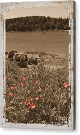 Wild Roses Acrylic Print by Jim Wright
