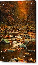 Wild Valley Acrylic Print by Irinel Cirlanaru