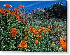 Wildflower Wonderland Acrylic Print by Kathy Yates