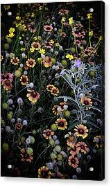 Wildflowers 5 Acrylic Print by Mauricio Jimenez
