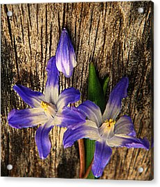 Wildflowers On Wood Acrylic Print by Chris Berry