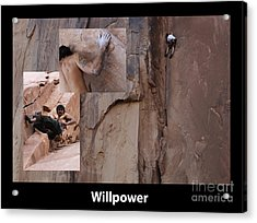 Willpower With Caption Acrylic Print by Bob Christopher