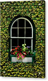 Window On An Ivy Covered Wall Acrylic Print by Bill Cannon