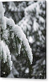 Winter Charm Acrylic Print by Gwyn Newcombe