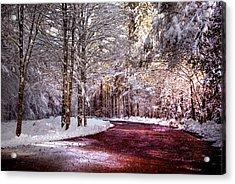 Winter Drive Acrylic Print by Anthony Citro